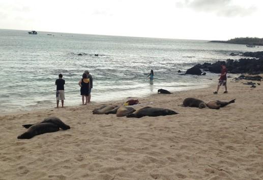 !Sea lion 4