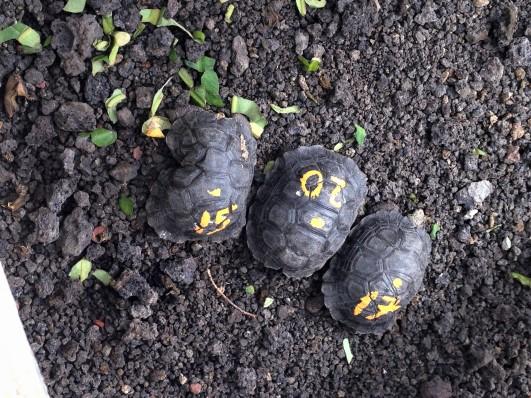 !Tortoise 2