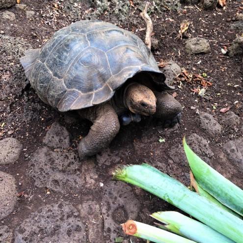 !Tortoise 3