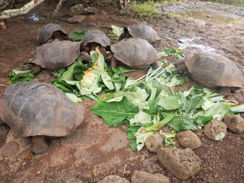 !Tortoise food 1